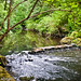 Small photo of Clackamas River by Leach Botanical Garden