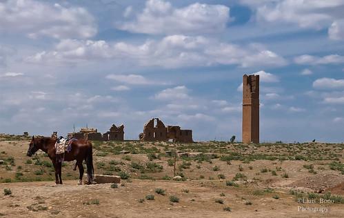 paisaje de la mezquita y caballo pastando