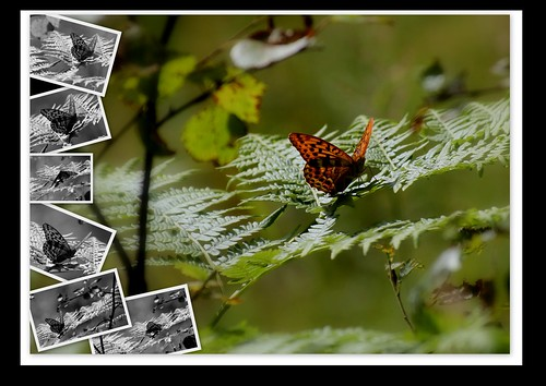 """#photo #project """"A day with my butterfly"""" #hiking #backpacking #visitnorway by @heidenstrom"""