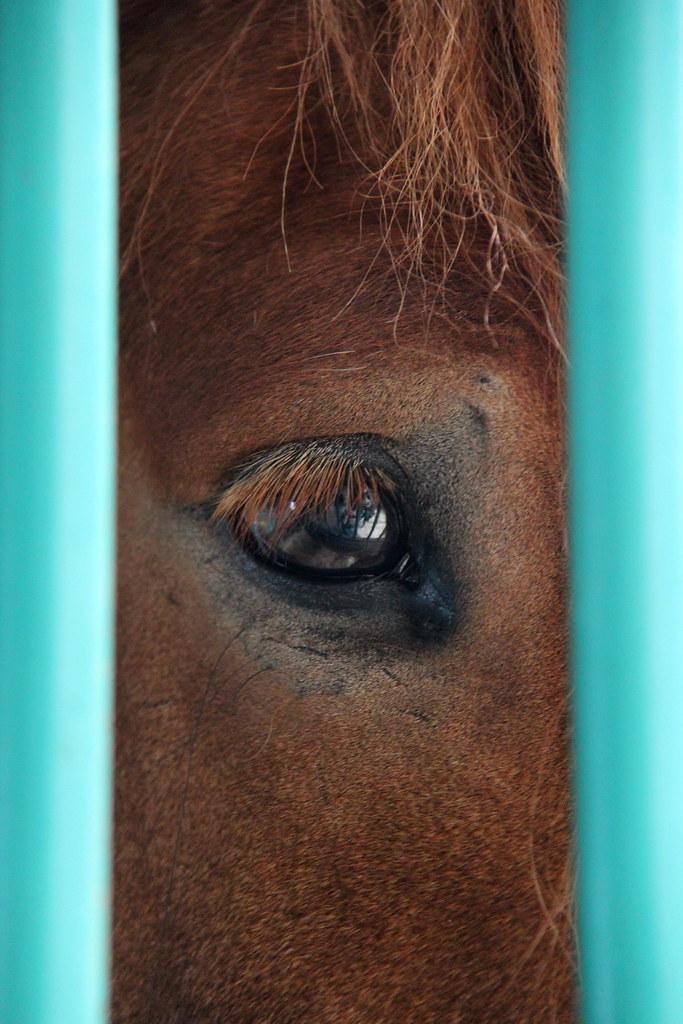 Horse-Eye Lens