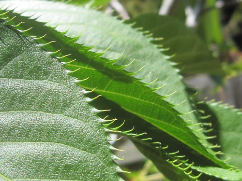Green Spikey Leaves