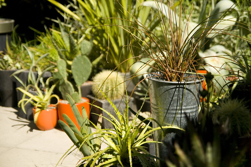 Planter vignette
