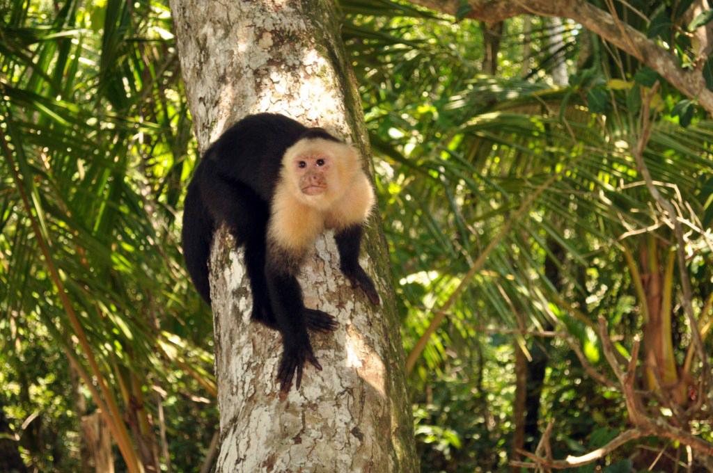 Parque Nacional de Manuel Antonio en Costa Rica Parque Nacional Manuel Antonio en Costa Rica, el más pequeño y más popular - 7734657124 c8d0f3098f o - Parque Nacional Manuel Antonio en Costa Rica, el más pequeño y más popular