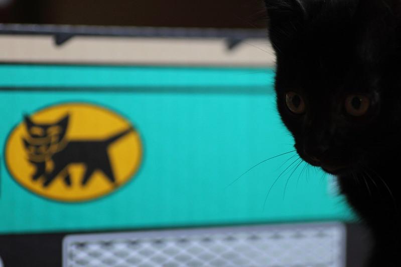 ヤマト運輸と黒猫