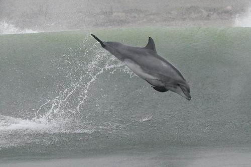Dolphinwatching in Peru with Nature Expeditions 14
