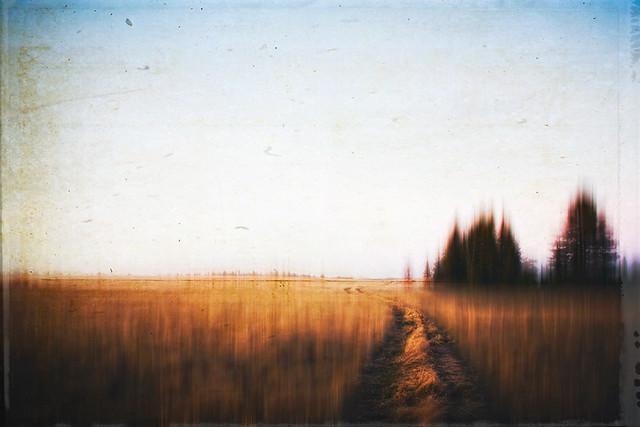 Paths VII