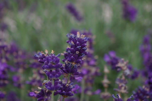 Kew_Gardens-011