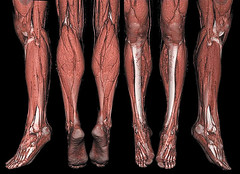 human leg, brown, limb, leg, thigh, organ,
