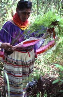 Susie Billie collecting medicinal plants: Big Cypress Seminole Indian Reservation, Florida
