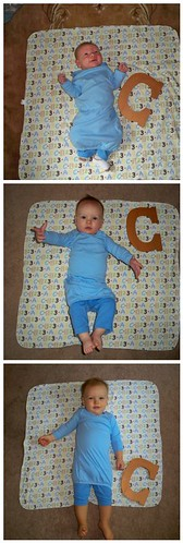 Cooper - 1 month, 6 months, 12 months