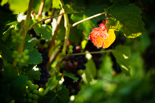 2308 - ripening