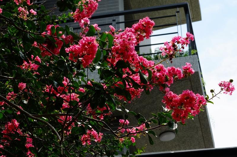隨拍_Fuji color
