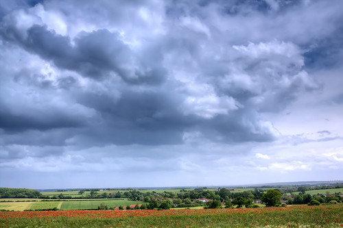day cloudy poppies hertfordshire sandridge roantrum heartwoodforest