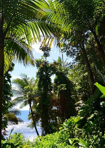 thehawaiitropicalbotanicalgarden tropicalplantsgardenslandscaping