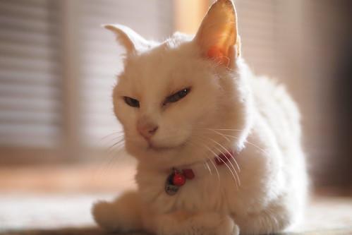 猫はぼーっとしていました。