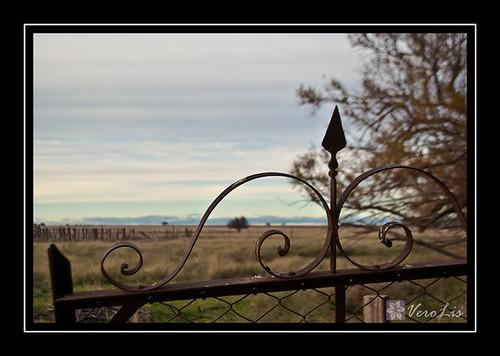 Caldén a lo lejos by VeroLis fotografías