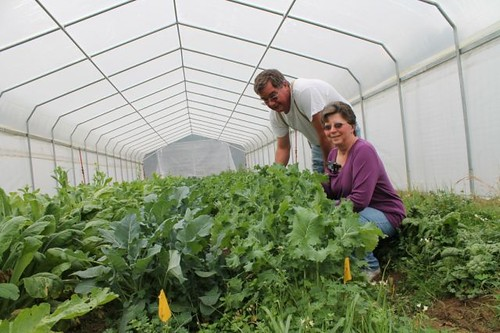 The Stoltzfuses use high tunnels to lengthen the growing season for fresh fruits and vegetables. They built the first high tunnel on their own, and they liked it so much, they decided to build a second one with the help of NRCS.