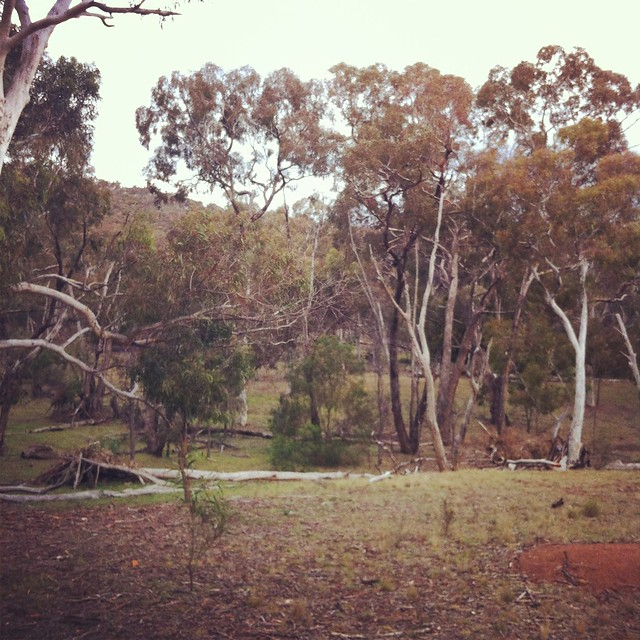 Bushwalk - Mt Majura Nature Reserve