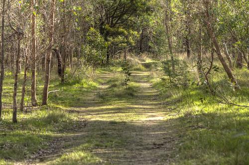 Woodlands dam track 2012-07-21 (_MG_1263)