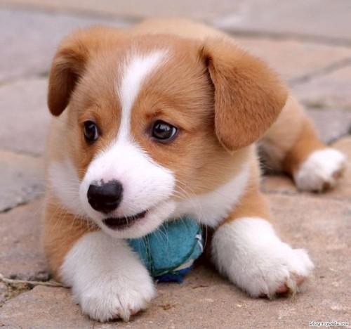Me = Puppy