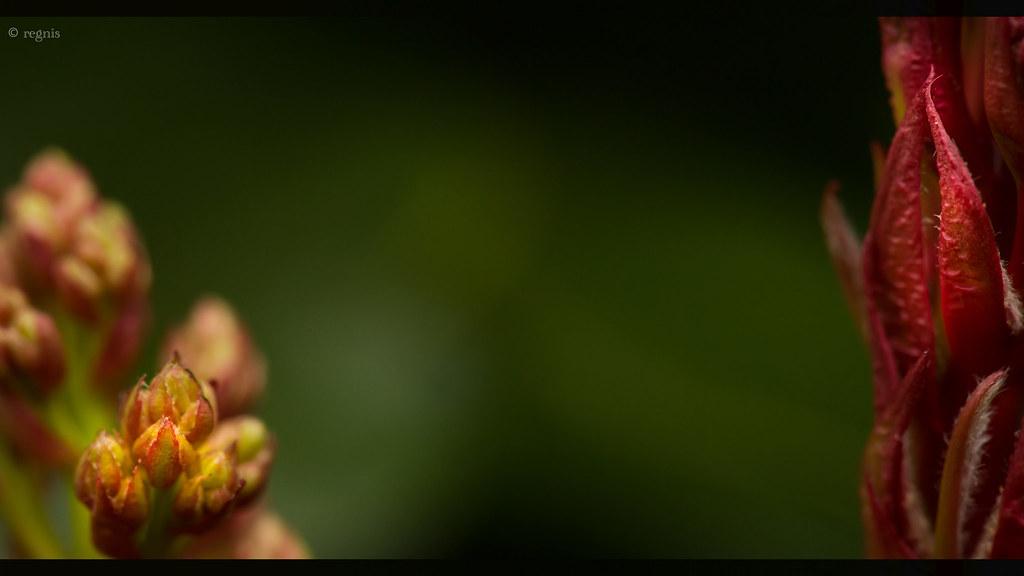 IMAGE: http://farm9.staticflickr.com/8294/7683922682_ff41dd89d0_b.jpg