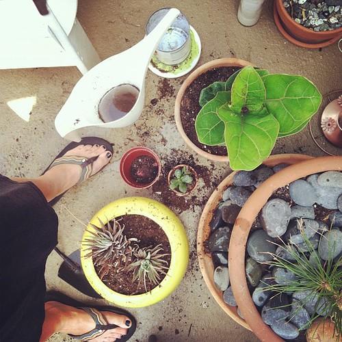 My garden may be small but I still love gardening!