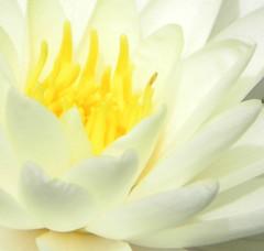 lotusbase
