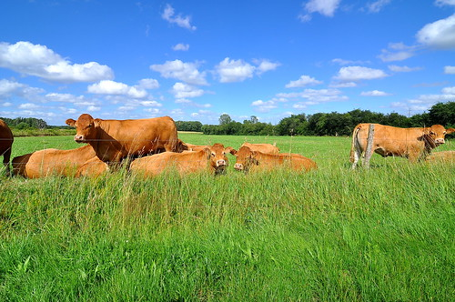 Around the Loire Valley
