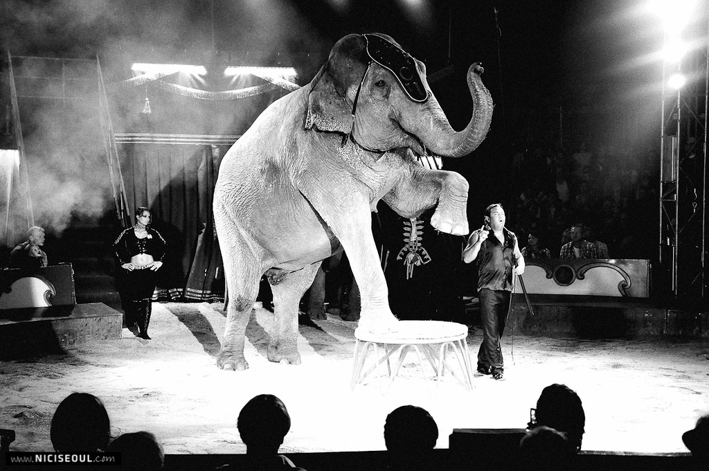 Elefant in the Circus