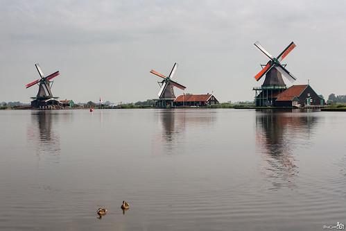 holland barn nederland thenetherlands ducks windmills historical noordholland zaandam eenden schuur historisch windmolens dekat hetjongeschaap dezoeker bracom