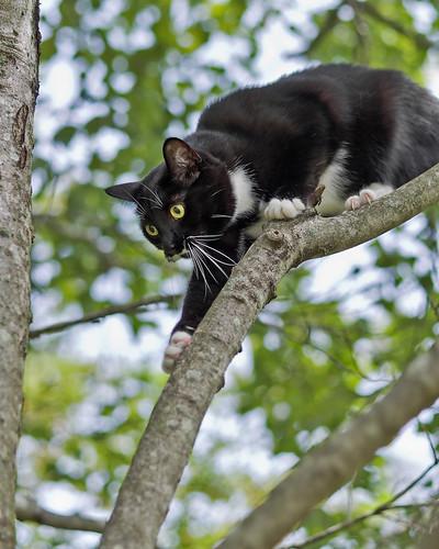 [フリー画像素材] 動物 1, 猫・ネコ ID:201208121600