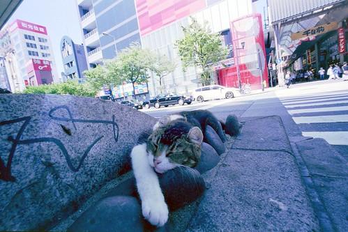 昼寝/ cat nap