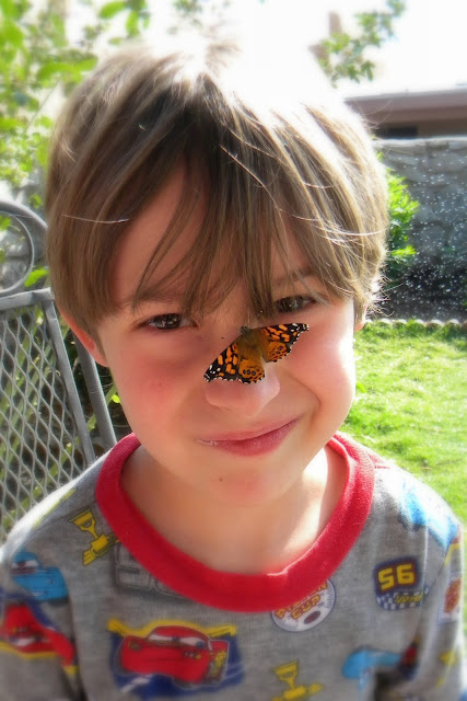 Painted Butterfly Nose
