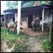 Nicaragua_i6845