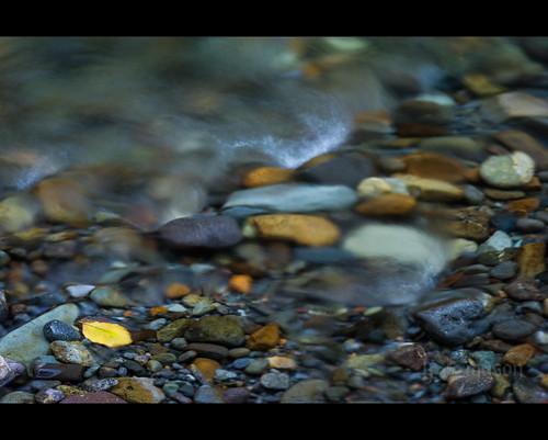 wet water river washington leaf rocks unitedstates stones running trail mountrainier ashford ohanapecosh groveofthepatriarchs nikonafnikkor85mmf14d