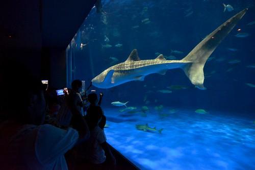 2012夏日大作戰 - 鹿児島 - かごしま水族館 (3)