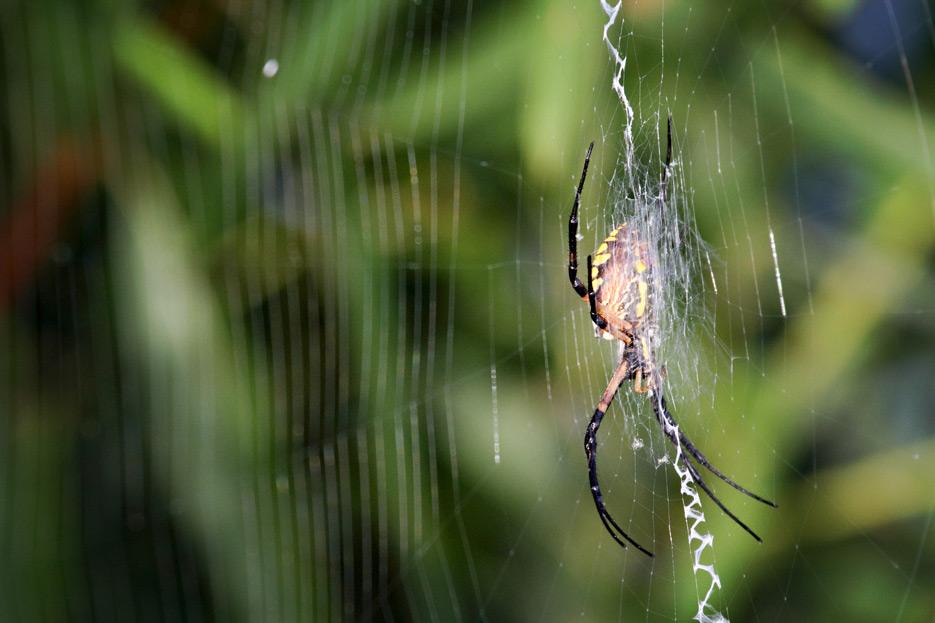 072612_04_bug_spider01