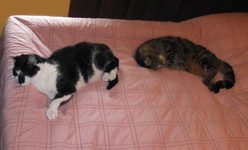 Lovie and Paul, snoozing on my waterbed