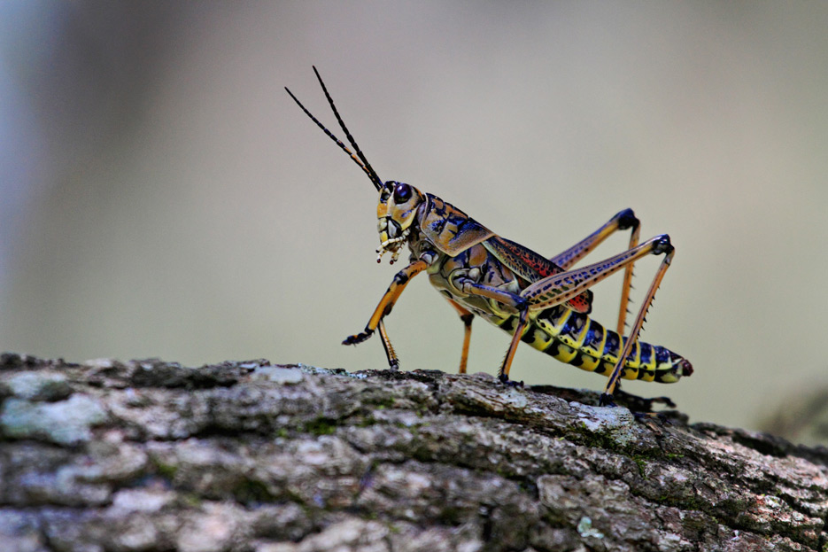 072612_09_bug_grasshopper01