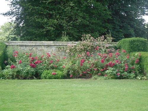 Hardwick Hall, roses