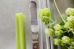 celery, hops