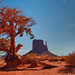 Mittens & Tree, Monument Valley