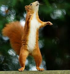 [フリー画像素材] 動物 1, 栗鼠・リス ID:201208301000