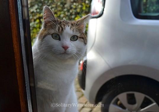 cat in belgium
