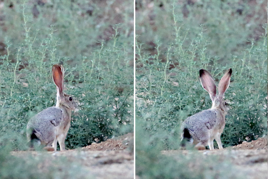 081212_02_rabbit_jack01