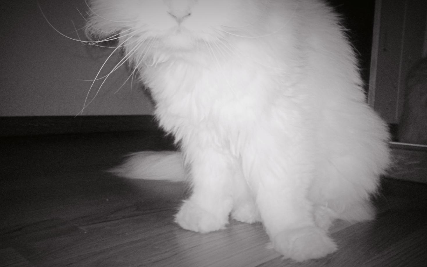 floorkat