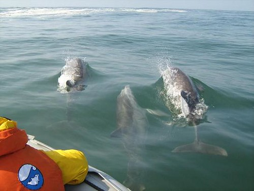 Dolphin watching in Peru with Nature Expeditions 03