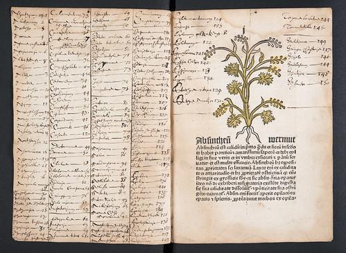 Manuscript index in Herbarius latinus (with German synonyms)