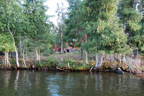 family trees vacation lake water minnesota forest island cabin woods shoreline resort shore 2012 familyvacation stlouiscounty freshwaterlake arrowheadregion lakevermilion northeasternminnesota cookminnesota ludlowsislandresort barryfackler barronfackler ludlowsisland onamuni lakeofthesunsetglow