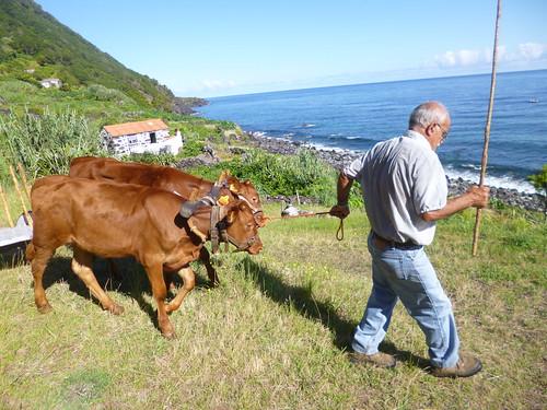 Serafim Brasil, agricultor e defensor da Fajã do Mero, São Jorge